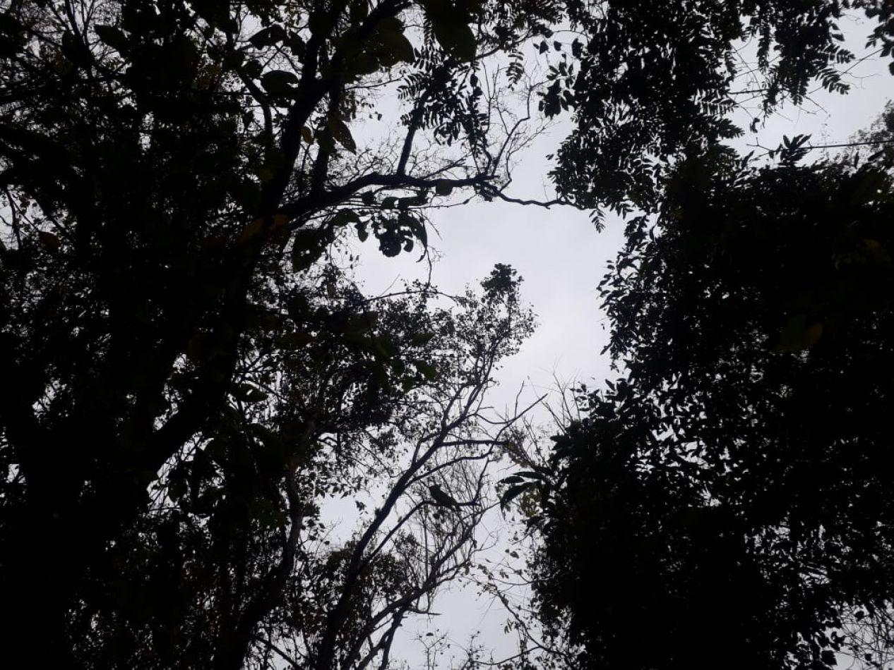 """Crónicas de la cuarentena: """"El viento en los árboles"""""""