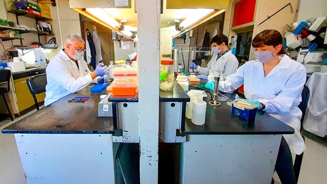 CoroVaxG.3, la vacuna argentina contra el covid que promete inmunidad con una sola dosis